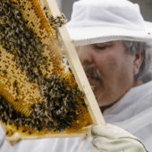 Smart City: Learn from bees how to connect data and minimise resource consumption.